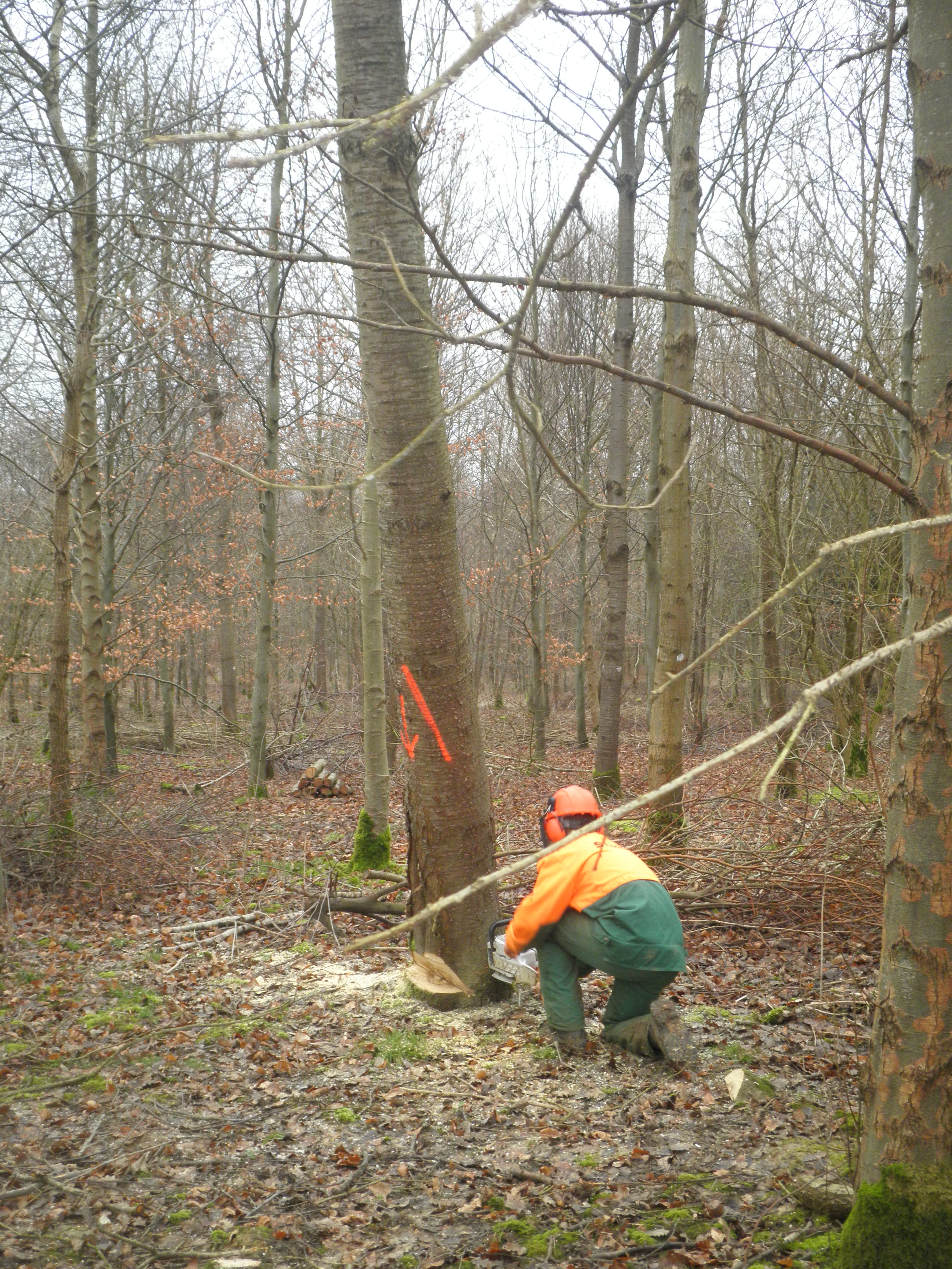 Bac professionnel foret bac pro for t ch teau de - Tire fort forestier ...
