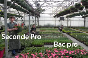 horticulture lycee mesnières bac pro seconde pro